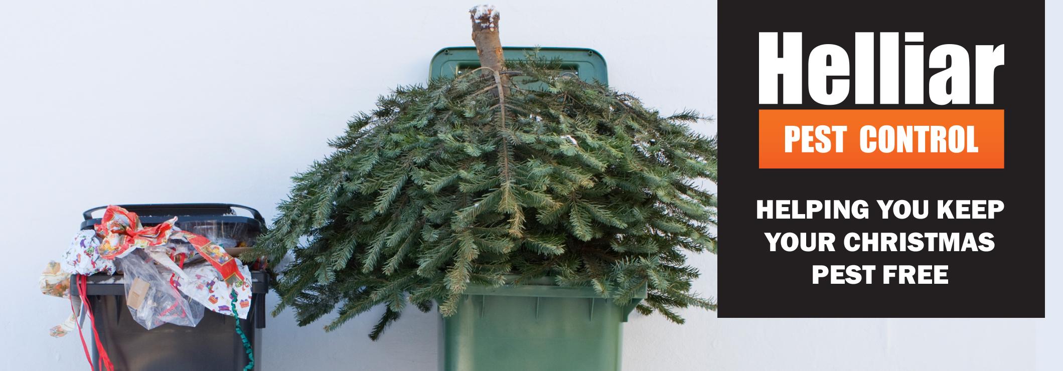 Christmas pest control