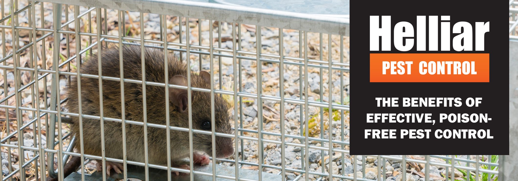 Get rid of rodents without poison